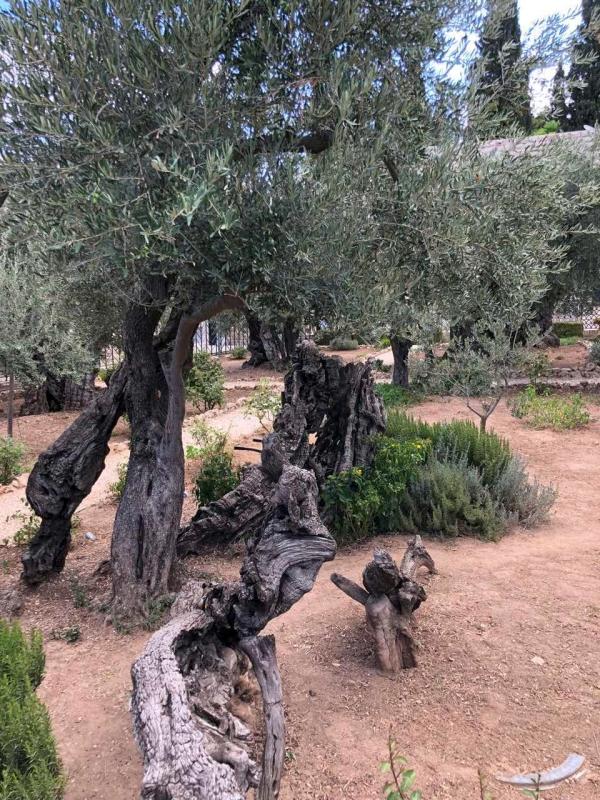 20180727-0803_Jeruzsalem_007